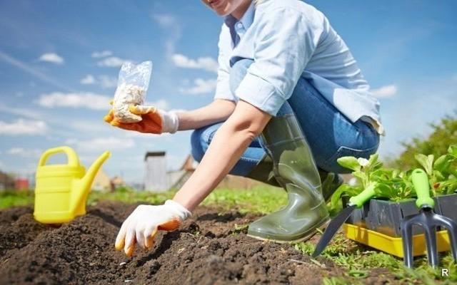 Семена овощей и зелени для открытого грунта