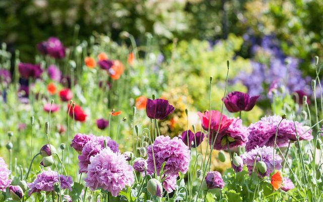 Цветочные почвопокровные смеси