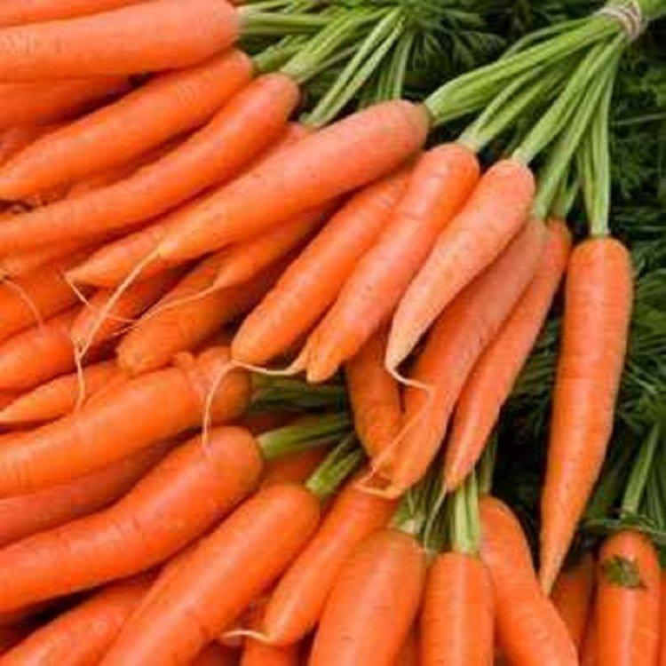 Морковь  Аленка, Украина.