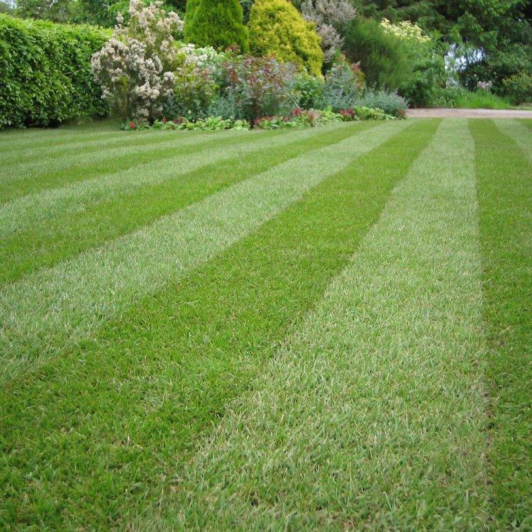 Газонная трава Универсальная, смесь, семена, DLF Trifolium, Дания