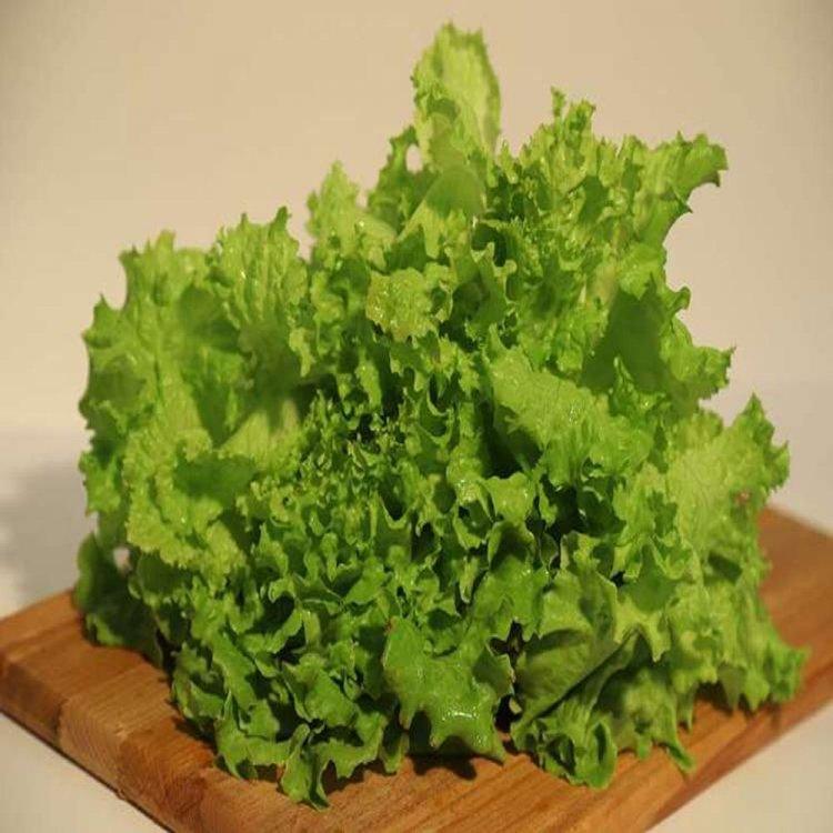 Салат листовой зеленый Афицион, Rijk Zwaan, Голландия