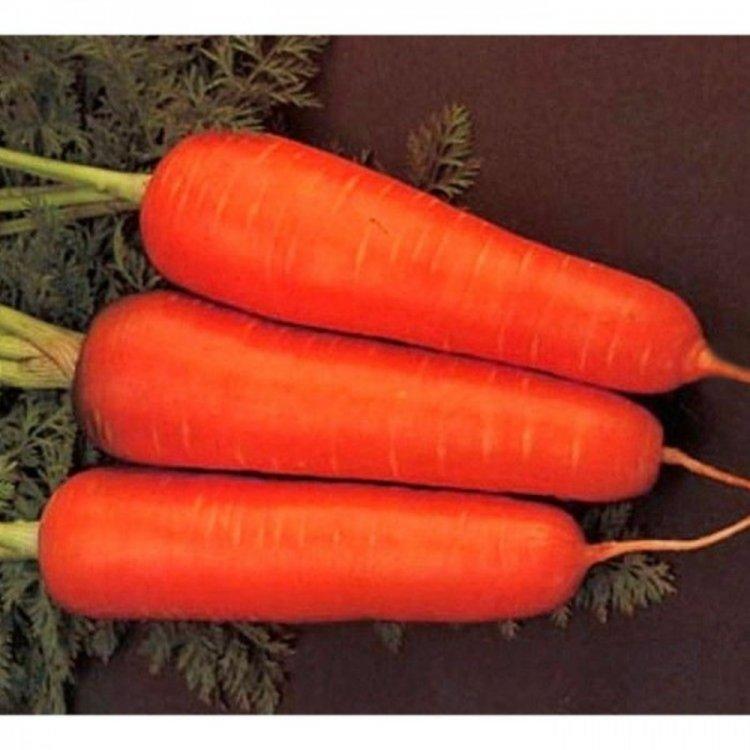 Морковь тип Шантане, Болтекс, Clause, Франция