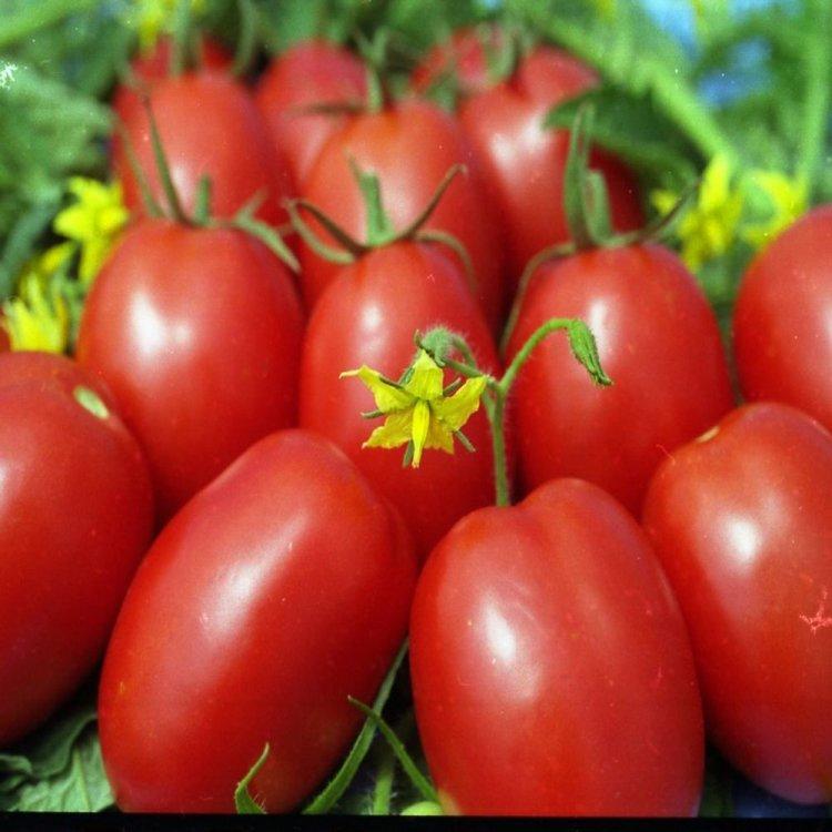 Томат Де-барао красный, сливка, среднепоздний, семена, 0,2 грамма, Legutko, Польша