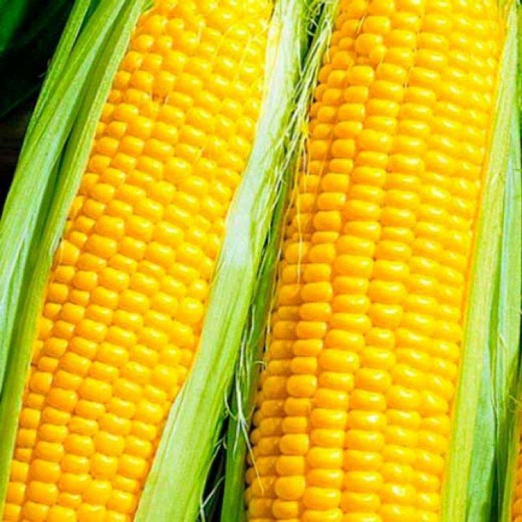 Свитстар 5 г кукуруза