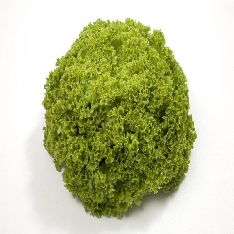 Салат полукочанный зеленый, Алеппо, Rijk Zwaan, Голландия