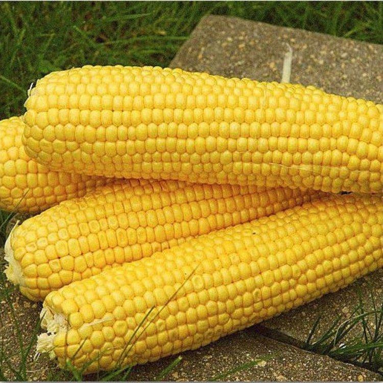 Кукуруза сахарная, сорт Деликатесная,  Украина.