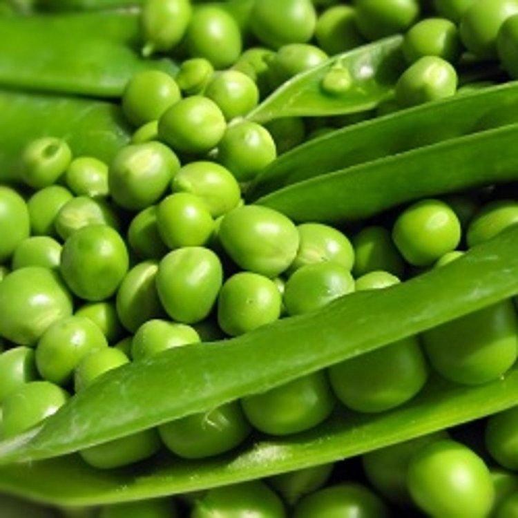 Горох овощной Сомервуд, Syngenta, Голландия