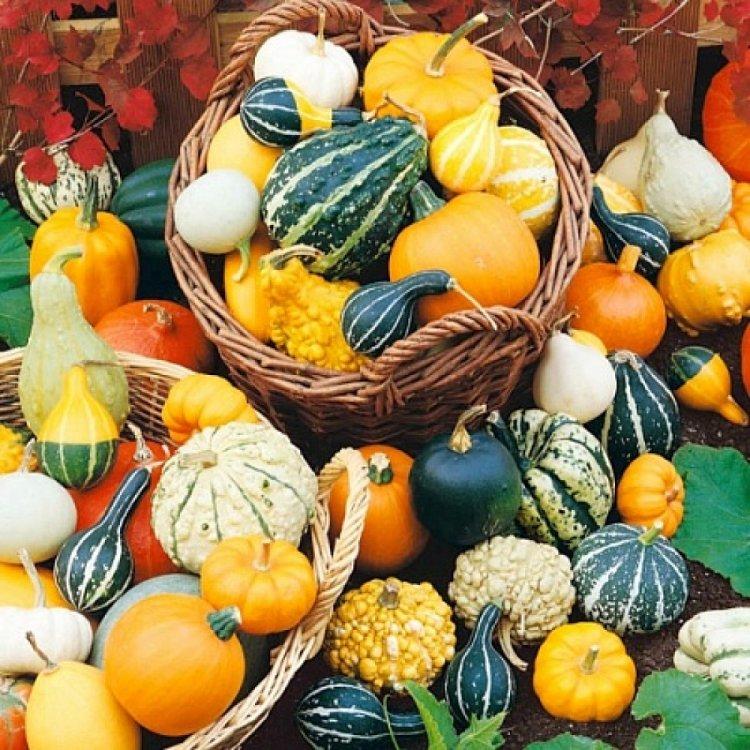 Семена тыквы декоративной, мелкоплодной, 10 штук, Legutko, Польша.
