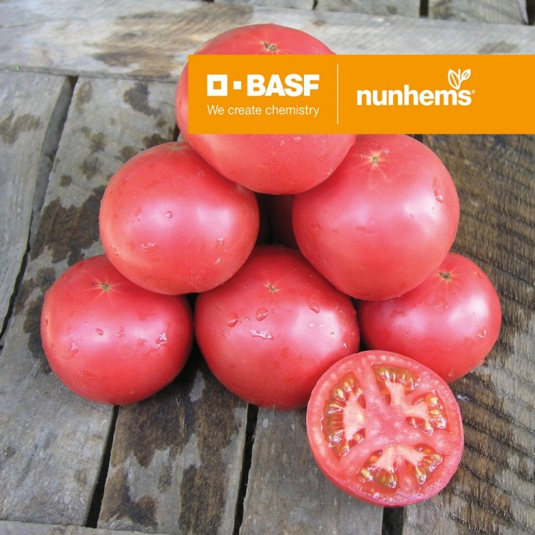 Томат Тарпан, ранний, Nunhems, семена, 10 штук, Голландия