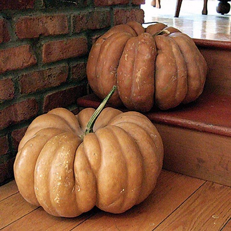 Тыква  Мускат де Прованс, семена 10 шт., Clause, Франция.