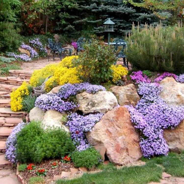 альпинарий в саду фото разрезе