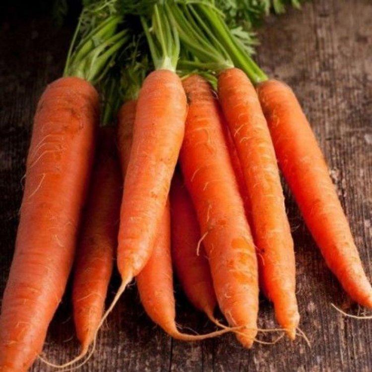 Морковь Каротан, тип Флаке, среднеранняя, Rijk Zwaan, Голландия