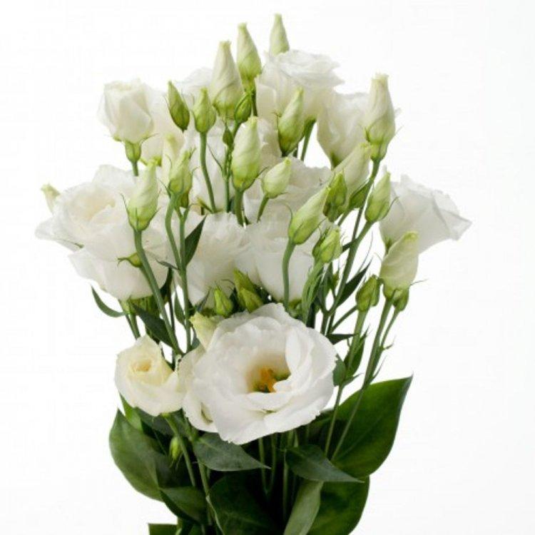 Лизиантус Мемэйд белая, семена цветов, Legutko, Польша.