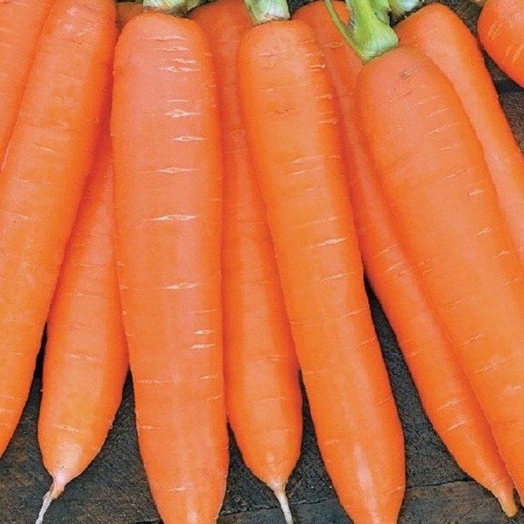 Морковь  Сиркана F1, Nunhems, Голландия.