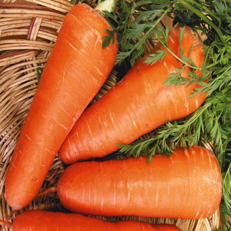 Морковь Ред кор, ранняя,Nunhems, Голландия