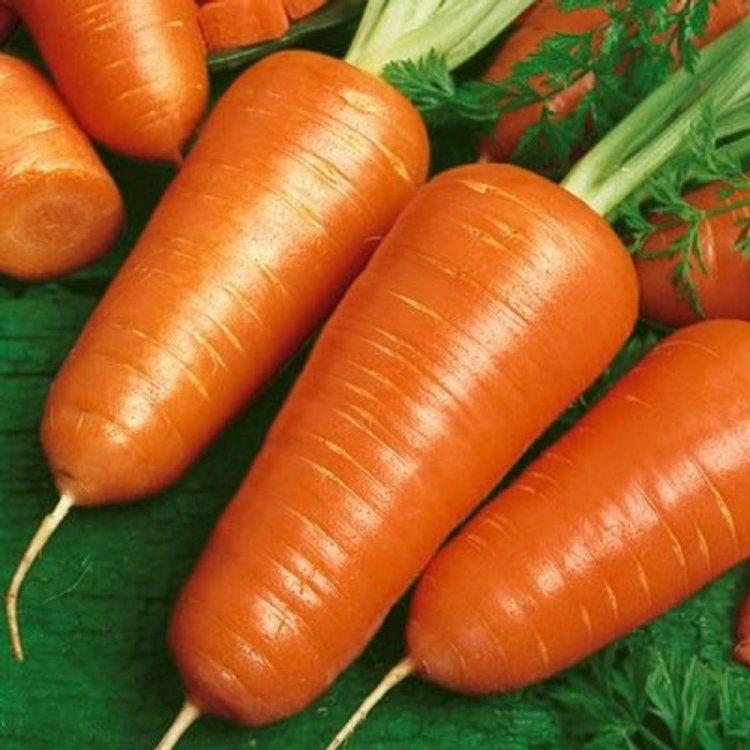 Морковь, сорт Шантанэ, Украина.