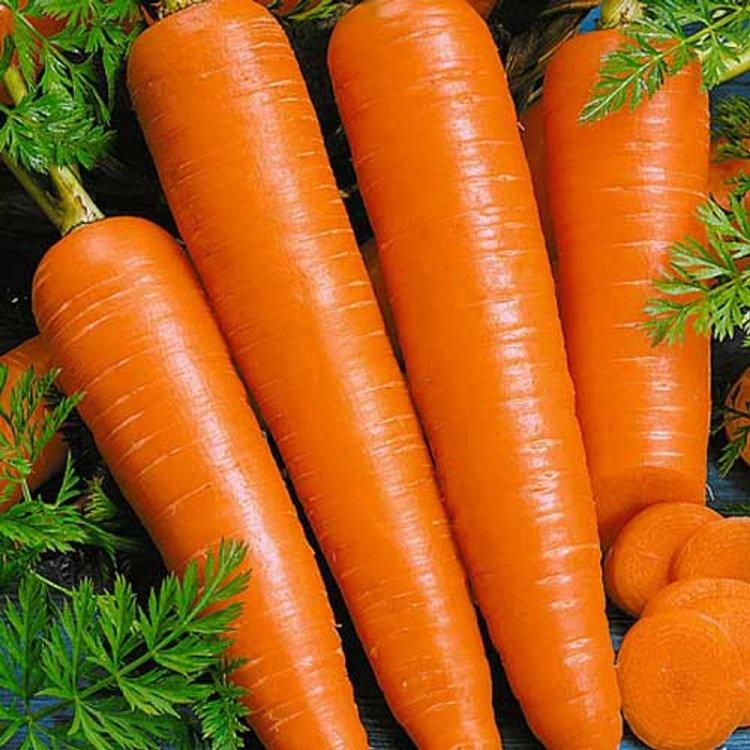 Морковь Вита Лонга, среднепоздняя, Bejo Zaden, Голландия