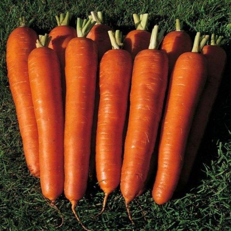 Морковь Длинная красная, среднепоздняя, Украина