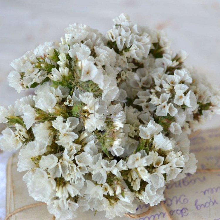 Кермек белый, семена цветов, Legutko, Польша
