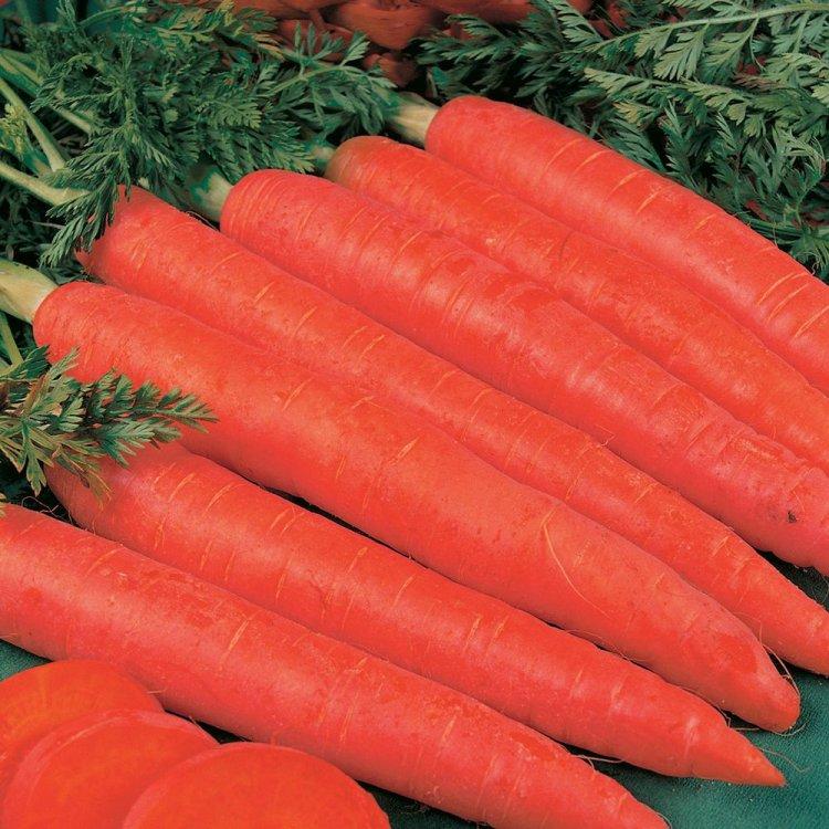 Морковь Красный великан, поздняя,  Украина