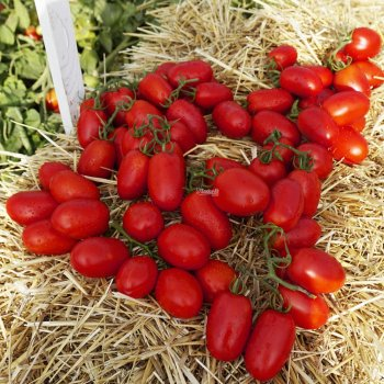 Томат Колибри, сливка, ранний, семена, 10 штук, Clause, Франция