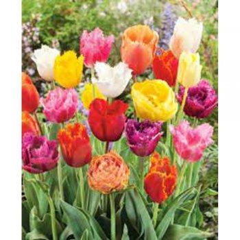 Тюльпаны бахромчатые смесь 25 шт