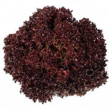 Салат листовой Кармези, ярко-бордовый Rijk Zwaan, Голландия