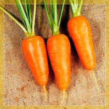 Морковь Шантан Канада, Legutko, Польша