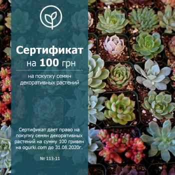 Сертификат на 100 грн на покупку семян цветов
