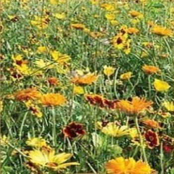 Цветочная смесь оранжевый букет, семена цветов, Legutko, Польша