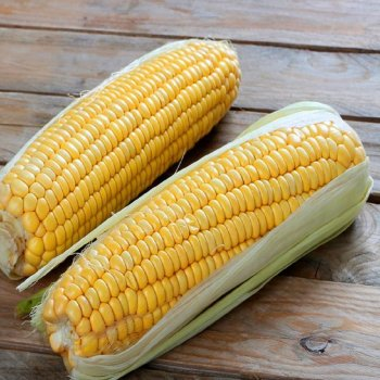 Кукуруза сахарная, сорт Брусница, Агропакгруп, Украина.