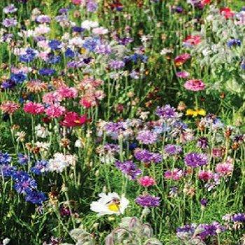 Цветочная смесь садовый помощник, семена цветов Legutko, Польша