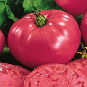 Томат Фаворит, розовый, среднеранний, семена, 5 грамм, Legutko, Польща