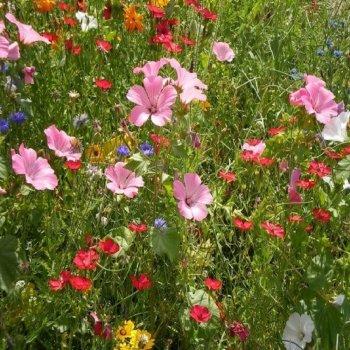 Цветочная смесь неприхотливая, семена цветов, Legutko, Польша