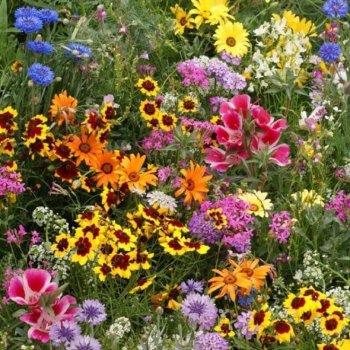 Цветочная смесь цветущий ковер, семена цветов, Legutko, Польша