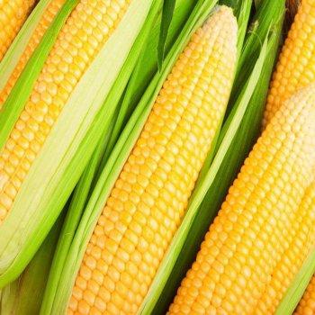 Кукуруза сахарная Ноа F1, Hazera Seeds, Голландия