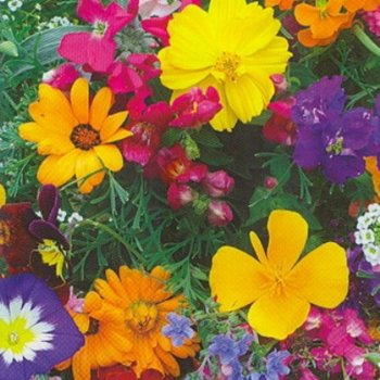 Цветочная смесь Балконная, семена цветов, Legutko, Польша