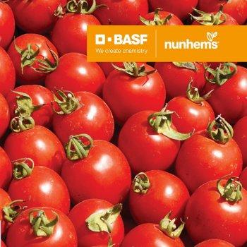 Томат Солероссо, ультраранний, семена, 20 штук, Nunhems, Голландия