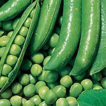 Горох овощной Динга,  Украина