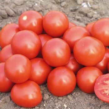 Томат Дональд, ультраранний, семена, 100 штук, Nunhems, Голландия