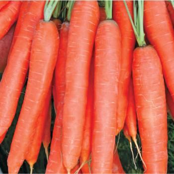 Морковь Престо F1 1 грамм