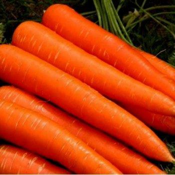 Морковь Осенняя королева, поздняя, Legutko, Польша