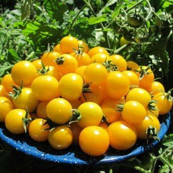Томат Оля, черри, желтый, ранний, семена, 0,2 грамма, Украина